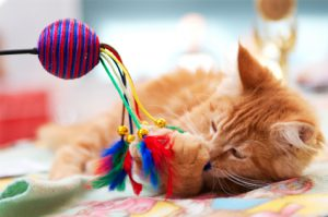 Pet and Home Care Services