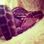 pet sitting for exotic pets