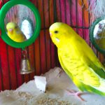 pet sitters are ideal for birds