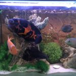 stay at home pet care for fish